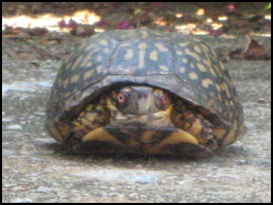 turtle 2_thumb[2]
