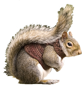 squirrel-cutout-3_thumb