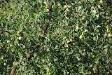 Hami - Arbre fruitier parc du melon
