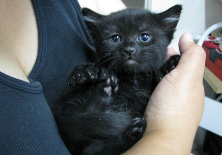 Black cats are considered to be unlucky in the United States