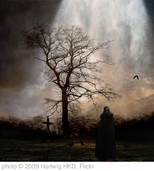'November Garden of Melancholy' photo (c) 2009, Hartwig HKD - license: http://creativecommons.org/licenses/by-nd/2.0/