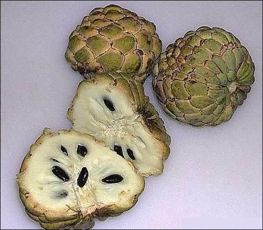 annona_fruit_1