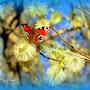 ludamihailova_nebesnoe.info_2.jpg