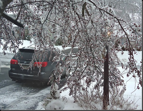Car and tree in ice