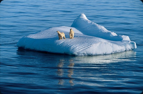 "IMAGE IS FOR YOUR ONE-TIME EXCLUSIVE USE ONLY FOR MEDIA PROMOTION OF THE NATIONAL GEOGRAPHIC BOOK ""POLAR OBSESSION."" NO SALES, NO TRANSFERS. ©2009 Paul Nicklen / National Geographic Mother bear and two-year-old cub drift on glacier ice. Hudson Strait, Nunavut, Canada (p. 77)"