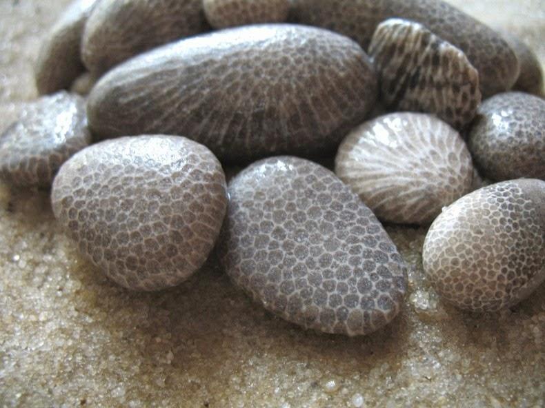 petoskey-stones-3