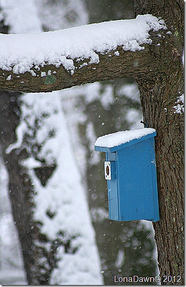 Birdhouse_Dec292012