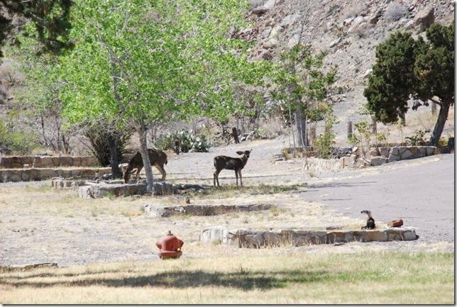 04-19-13 A Elephant Butte Lake Area 094