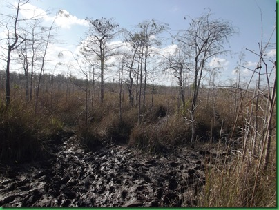 Big Cypress Swamp Hike (2)