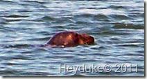 2011-09-13 Cape Cod NP 017