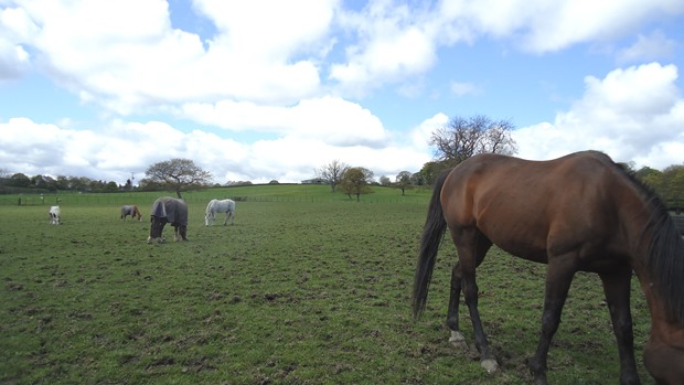 Too busy grazing