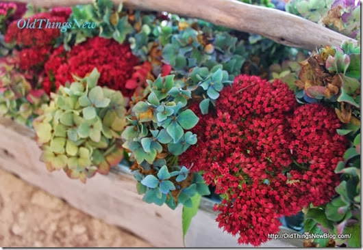 10-Hydrangeas-in-tool-box-051