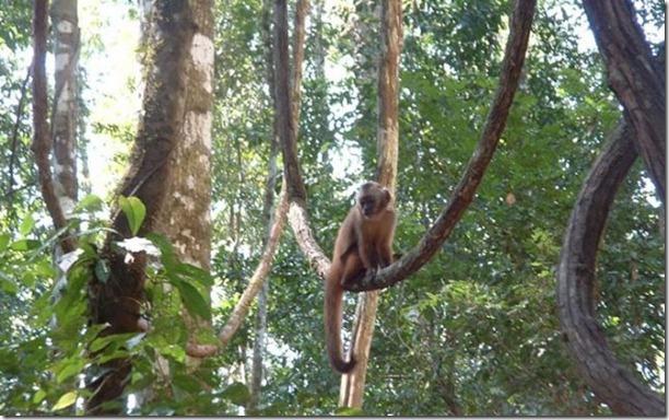 beautiful-amazon-rain-forest-13