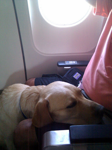 Tilden rests his head on my lap as we get in to SFO