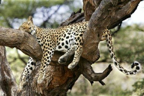 Have you ever been Tired like this...........?