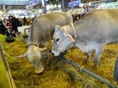 2015.02.26-073 vache brune
