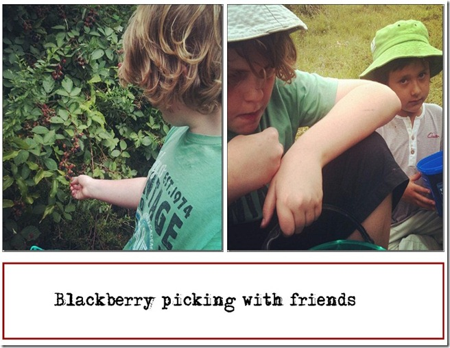 blackberry picking feb 2012