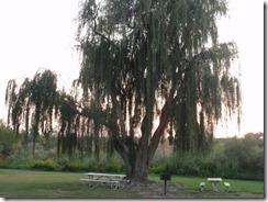 Hood Park WA picnic area