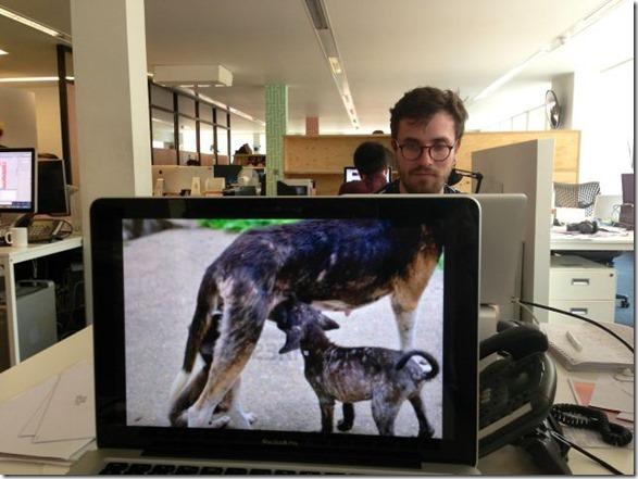 photobomb-coworkers-animal-9