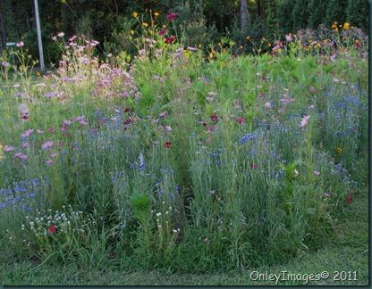 meadow0716 (8)