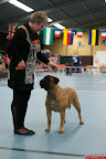 20130510-Bullmastiff-Worldcup-0834.jpg