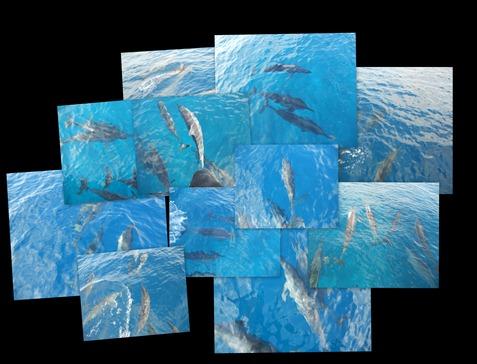 delfiner 101
