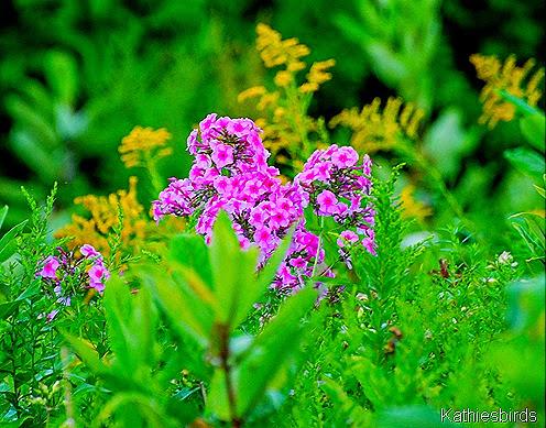 5. meadow flowers-kab