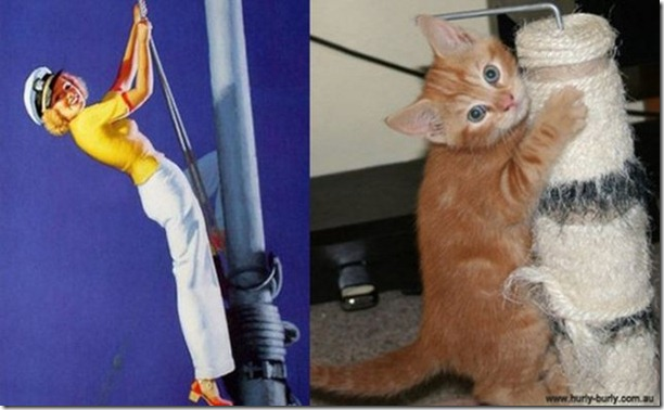 cats-pinup-models-21