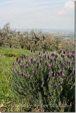 La Selva i fiori 4
