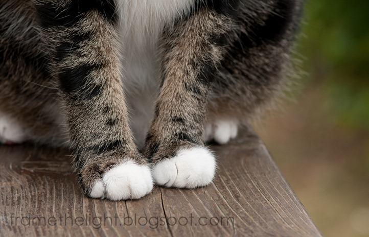 Cats macro-5-1