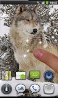 Screenshot of Wolf Best HD live wallpaper