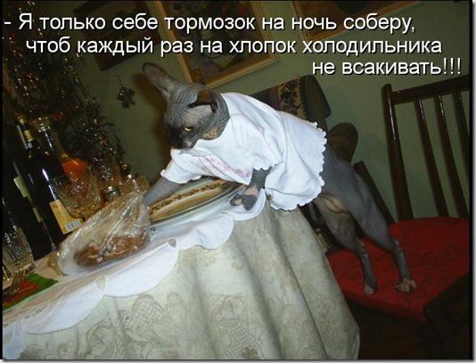 kotomatritsa_ph