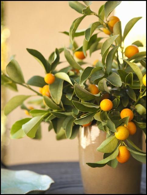 kumquats-vase