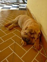 Hostel puppy #2!