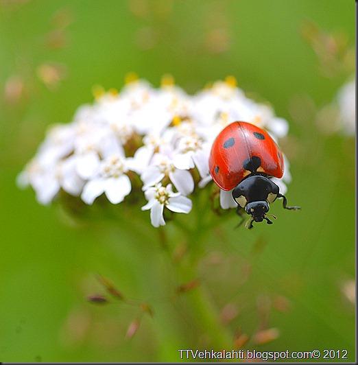 hyönteisiä ötökät 016