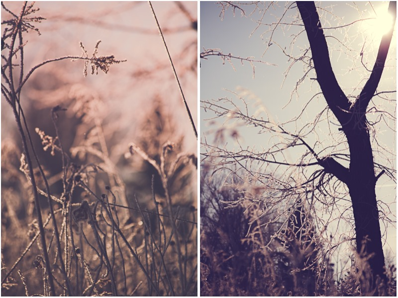 SycamoreLane Photography- winter nature