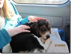 jan 2013 & puppy Scout 012