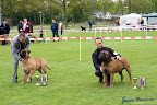 20100513-Bullmastiff-Clubmatch_31160.jpg