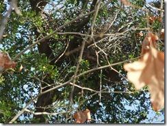 Hawk nest 2-29-2012 8-56-25 AM 1927x2690