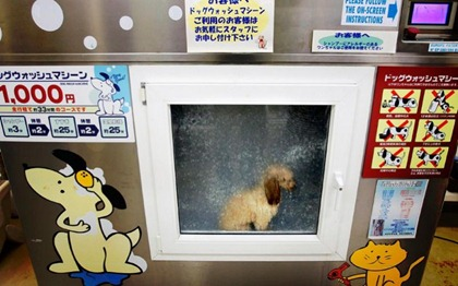 dog-inside-japanese-dog-washing-machine-800x500