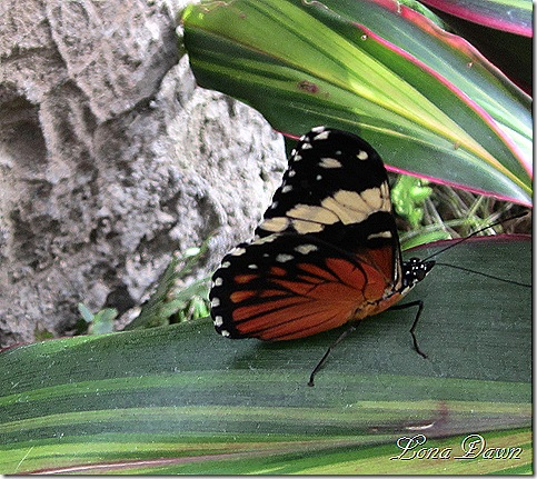 FPC_Butterfly2