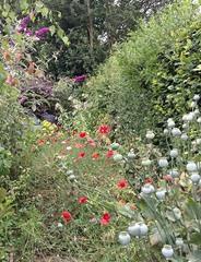 norma's wild garden