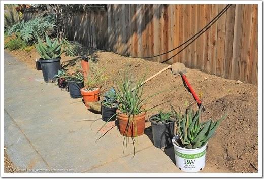140315_desert_garden_planting3