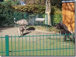 2011.11.14-005 kangourou géant