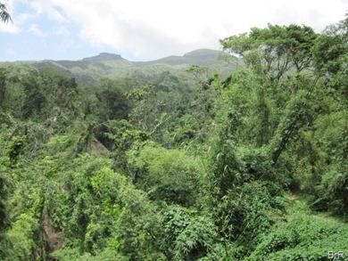 Blick_über_den_Dschungel