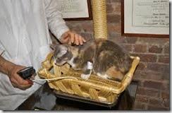 ipertensione felina