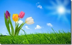 2532-spring-nature-wallpapers-hd-wallpapers