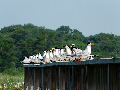 VIP Tern convention