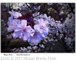 'Flowers' photo (c) 2011, Moyan Brenn - license: http://creativecommons.org/licenses/by-nd/2.0/