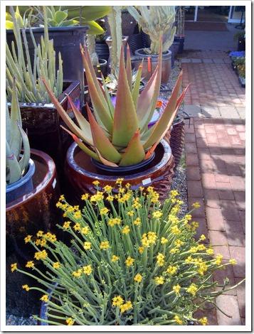 130403_StaBarbara_Terra-Sol-Garden-Center_016